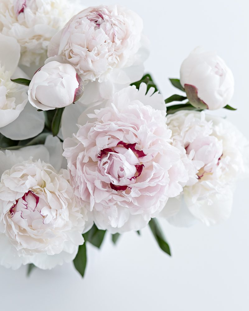 first peonies