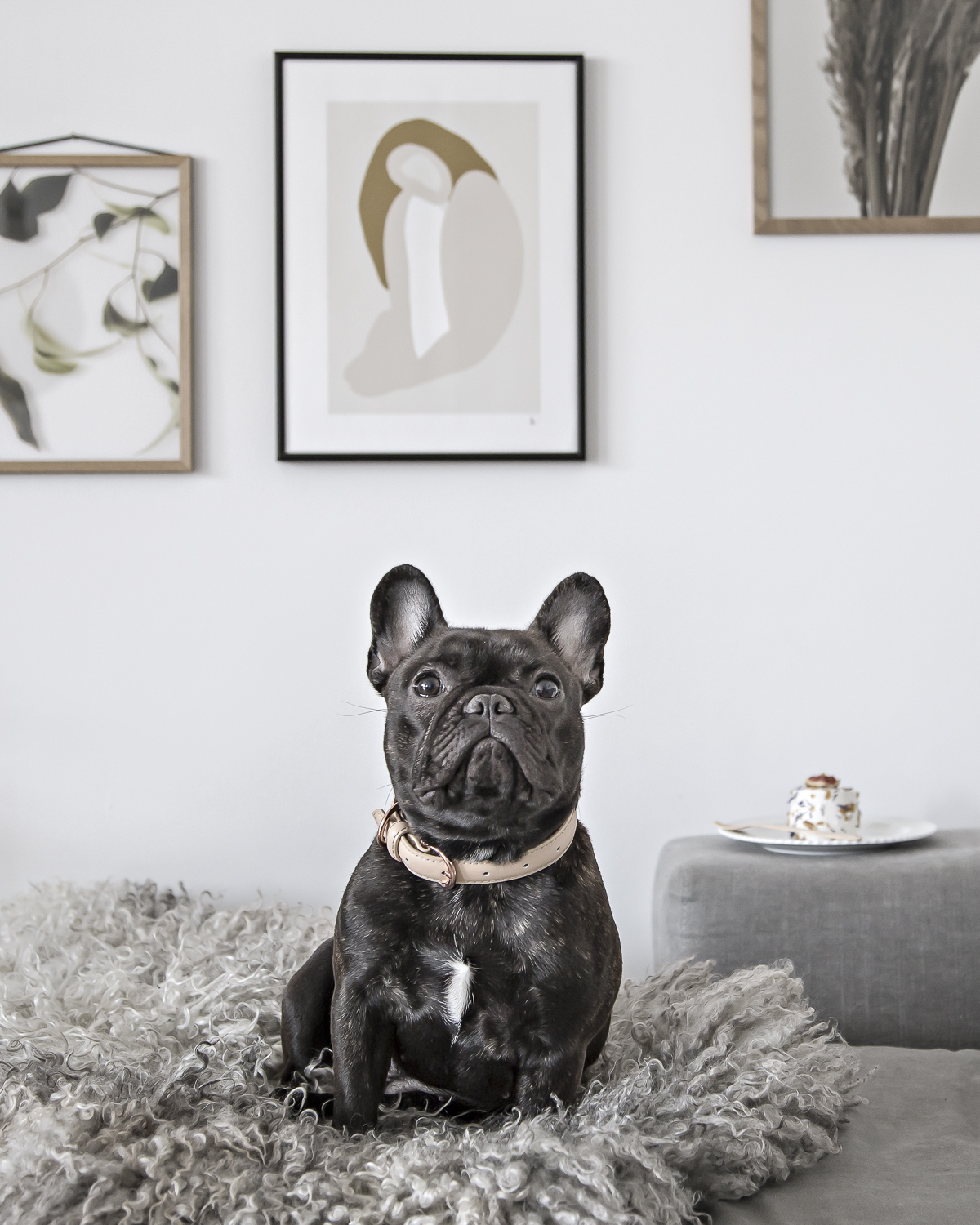 Getting a French Bulldog – my personal advice